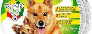 best dog flea collars review
